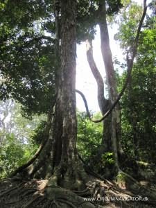 Rainforest at Tikal