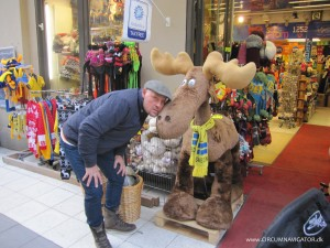 a moose and my brother in Stockholm