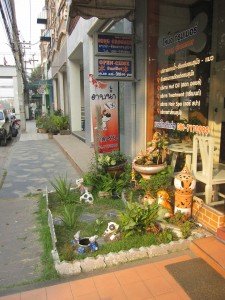 pet spa Chiang Mai Land road